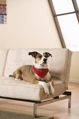 cách làm sạch ghế sofa vải phòng khách