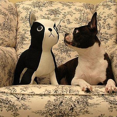 gối ôm trang trí hình cún đáng yêu