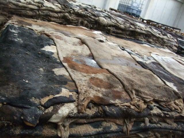 Các tấm da bò thật tự nhiên được xử lý trước khi chế tạo thành các món đồ nội thất, tiêu dùng