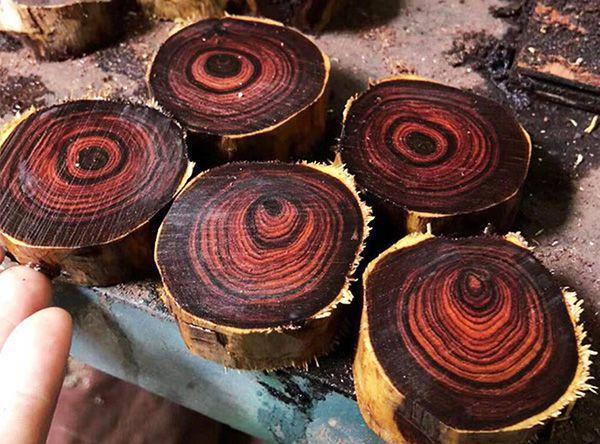 tác hại của gỗ sưa
