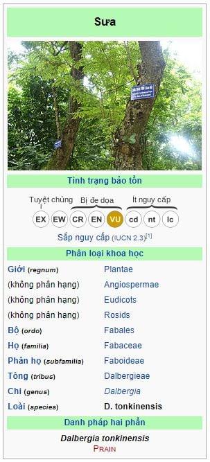 gỗ sưa wiki