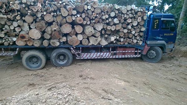 trọng lượng riêng của gỗ bao nhiêu