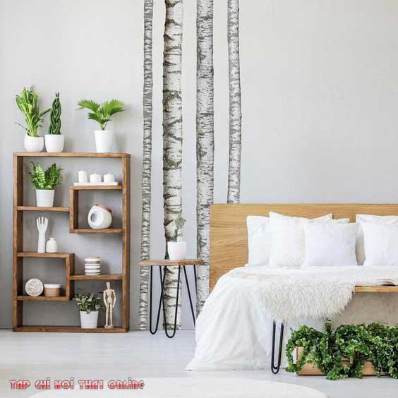 Tại sao không để cây xanh trong phòng ngủ khi chúng tốn diện tích người sử dụng và có thể có có côn trùng.